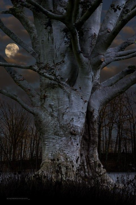 tree by moonlight.     Brought to you by HERO$CARD. Visit us on the web to see how you can save on the items you want while creating giving to those in need. www.heroscardww.com