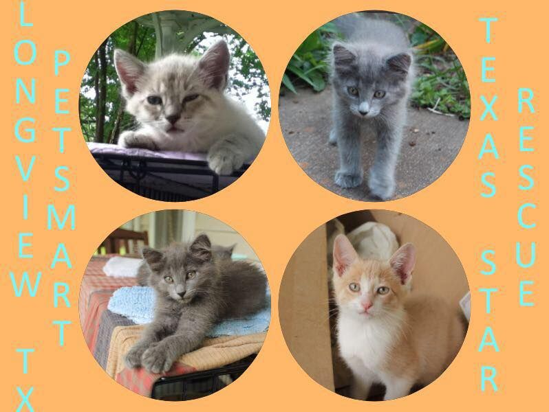 Pin on Adoptable Cats