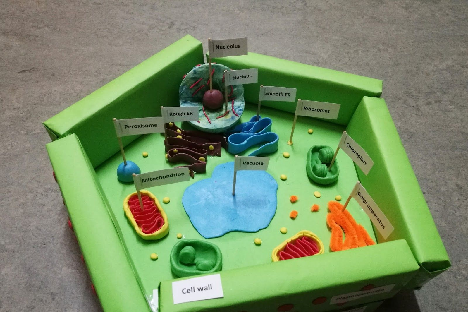 diy plant cell model project jile stuff pinterest