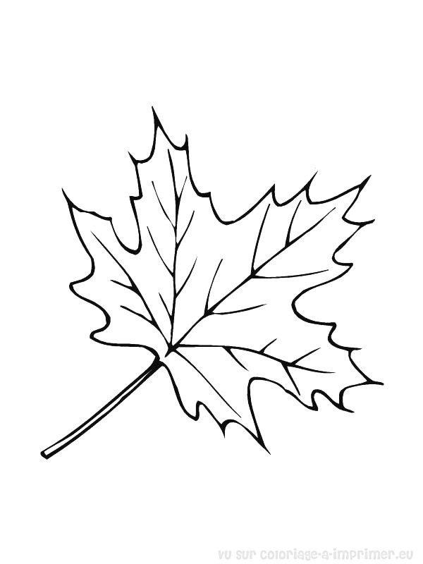 Feuille d 39 erable pour enfant pinterest coloring pages fall leaves coloring pages et - Feuille erable dessin ...