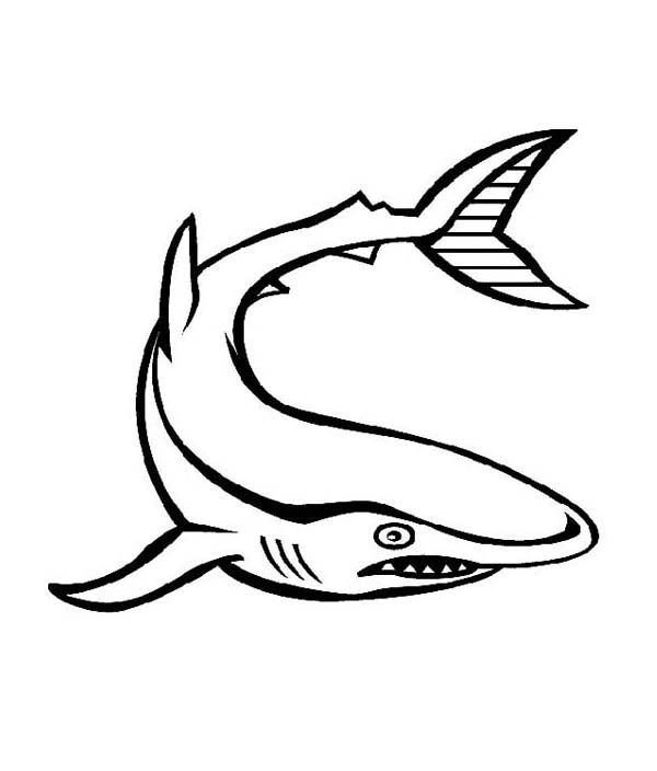 sea animals coloring pages pinterest - photo#27