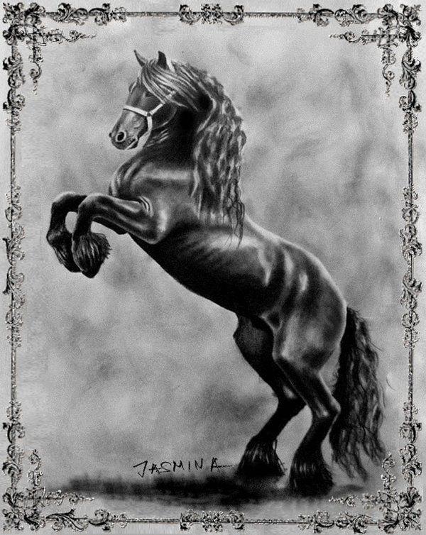 black_friesian_prancing_horse_graphite_drawing_by_jasminasusak-d9fd7yf.jpg (600×754)