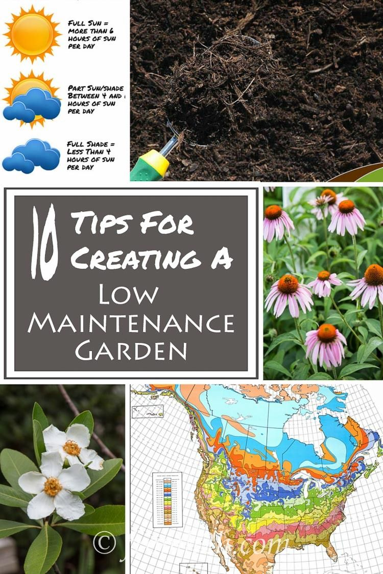 10 Tips For Creating A Low Maintenance Garden   Like the idea of having a garden but don't want to spend a lot of time working in it? Check out these tips for creating a low maintenance garden.