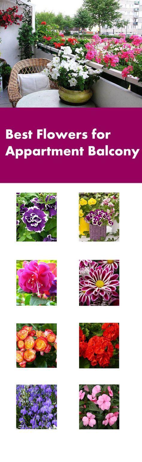 Beste Blumen für Balkongarten - Ashley Dolson - Dekoration #apartmentbalconygarden