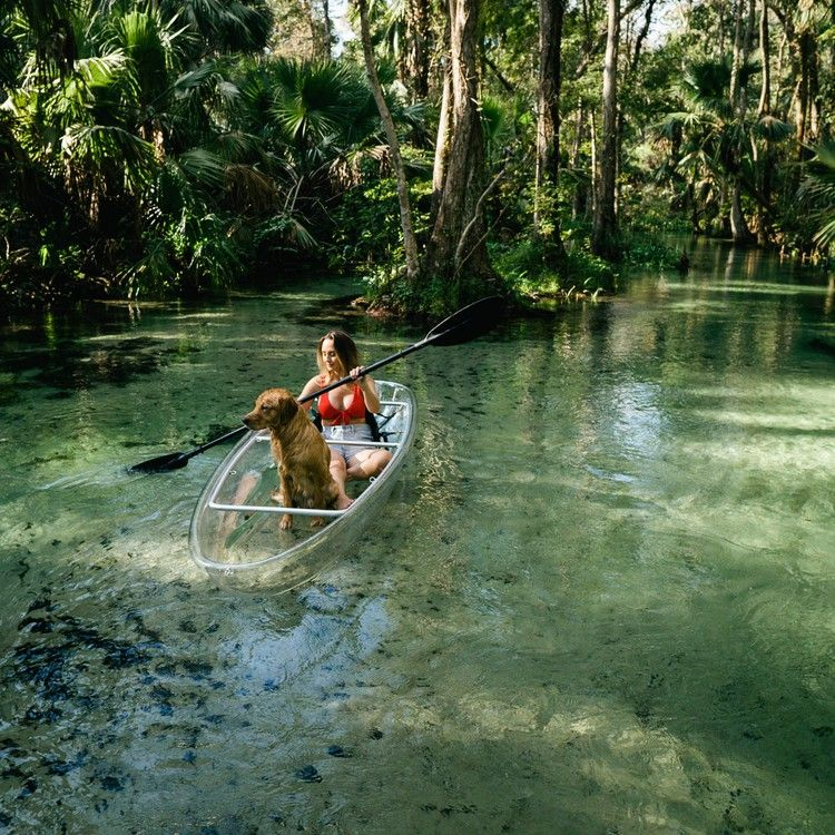 Clear Kayak Tours And Otter-spotting In Florida Offer An