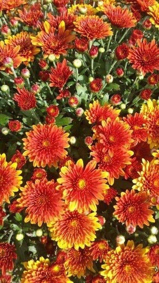 Épinglé par Madeline Kay sur Flower wallpaper Fleurs