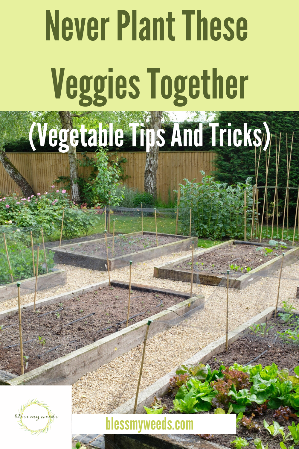 Vegetable Gardening: NEVER Plant These Veggies Together ~ Bless My Weeds