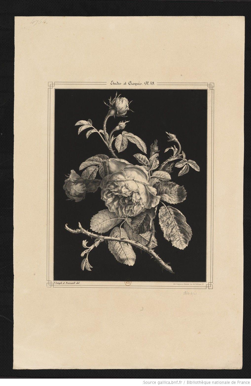 Etudes et croquis : album de fleurs, fruits, oiseaux, insectes ...