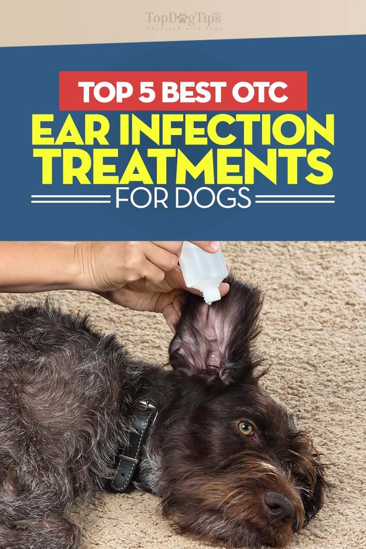 The 5 Best Otc Dog Ear Infection Treatments Dog Ear Infection Treatment Yeast In Dogs Ears Ear Drops For Dogs