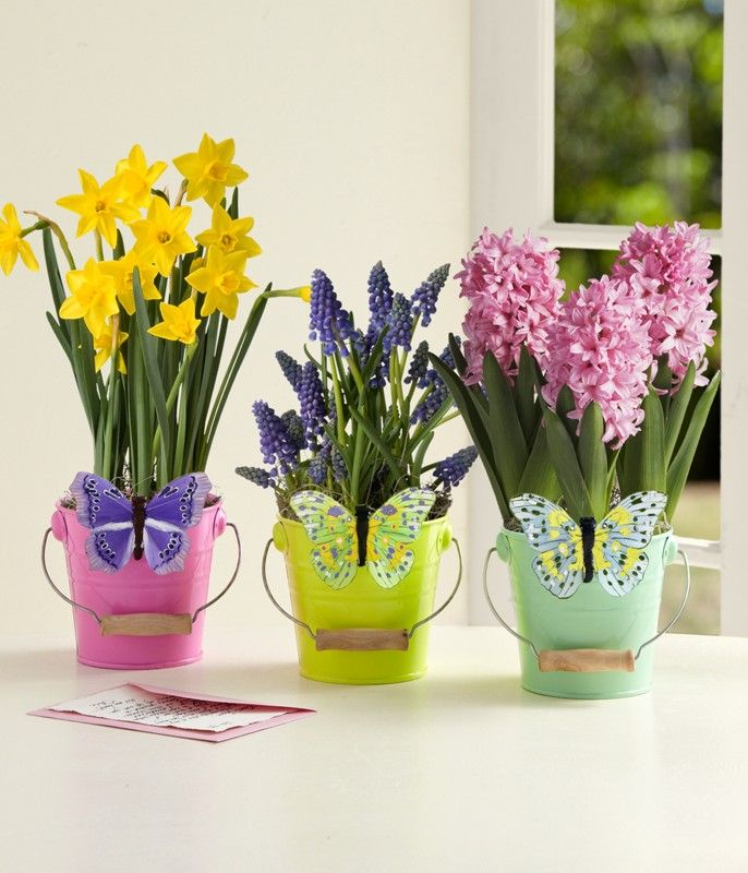 Butterfly bulb trio springflowers click image twice to see butterfly bulb trio springflowers click image twice to see more easter flowers negle Image collections