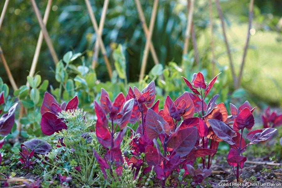 4 astuces pour un beau jardin sans entretien | Pinterest | Plante ...