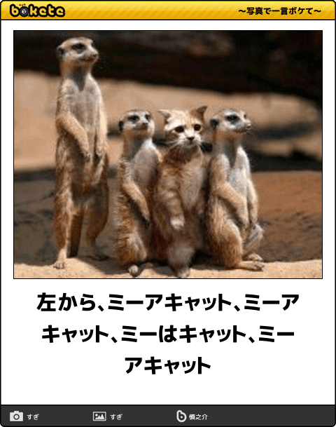 腹筋がよじれる 可愛い ネコ画像 におもしろい一言を添えた傑作ボケて60選 動物ミーム ミーアキャット 面白い画像