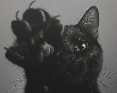 black cat emoji - Google Search Animals Pinterest