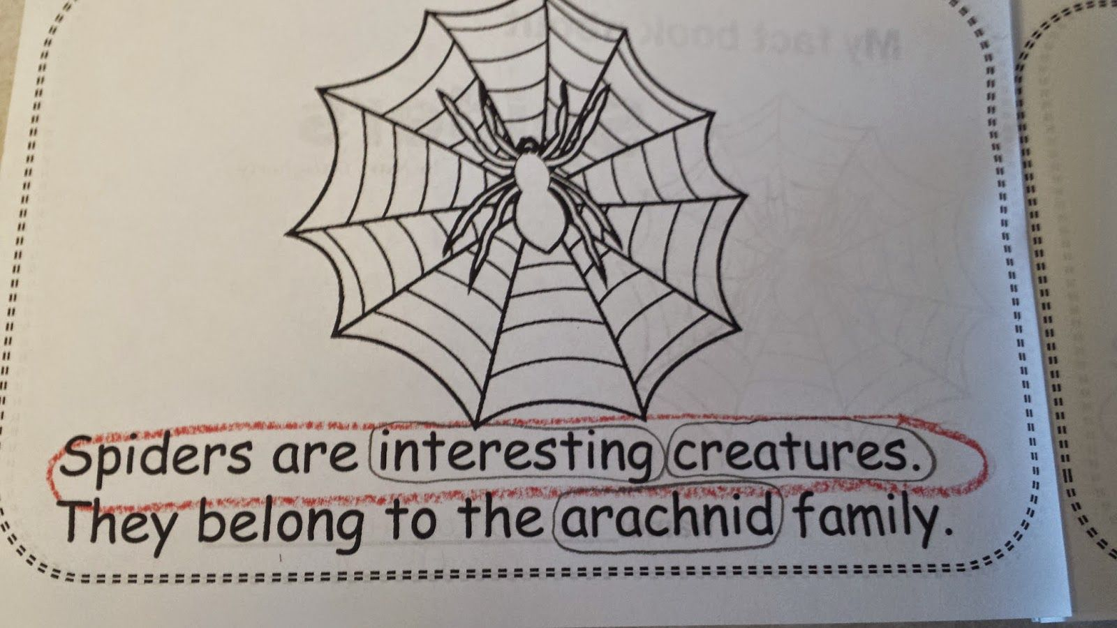 Spider Fact Book With Close By M A D About First Grade