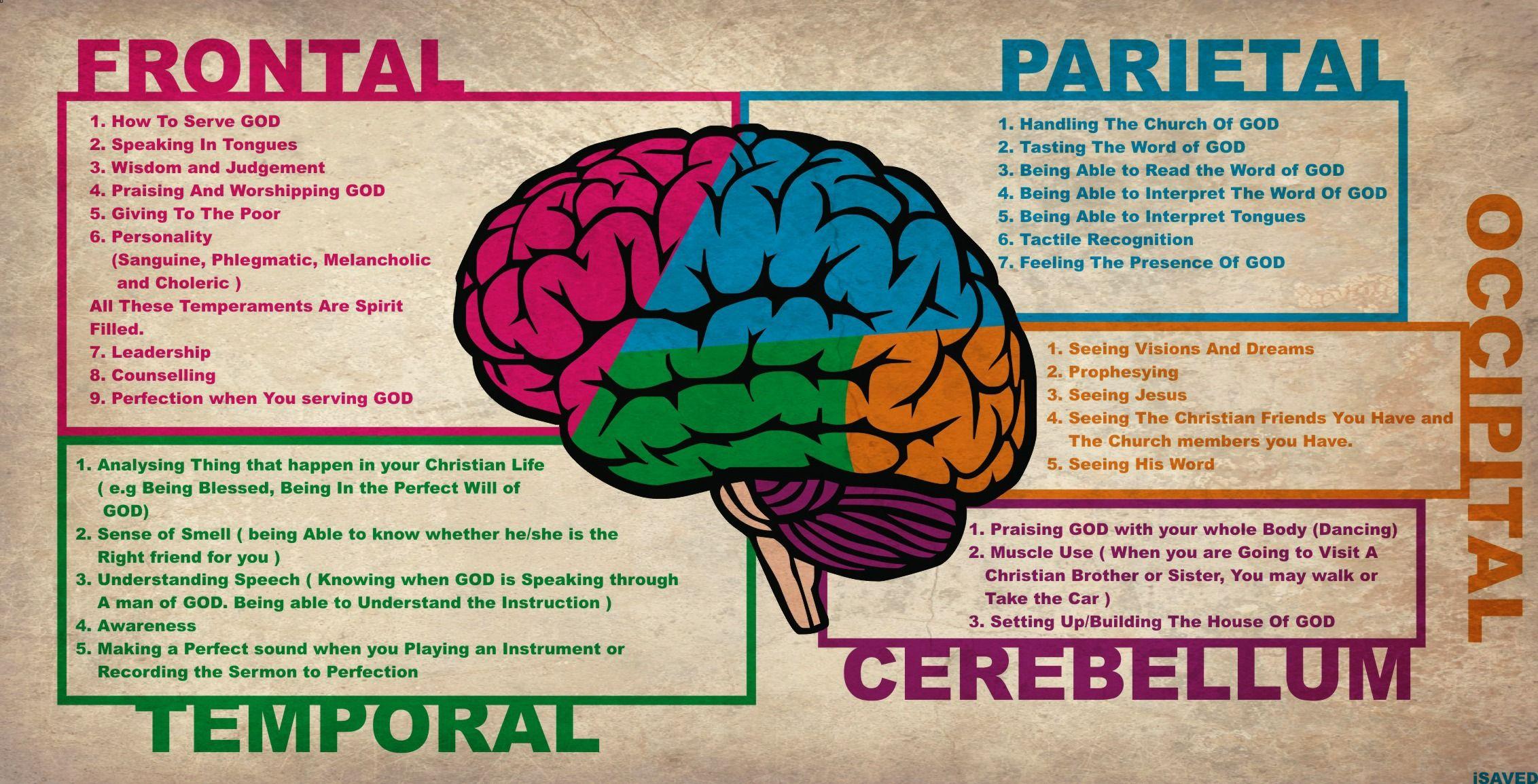 frontal rainfall diagram radio wiring for 1999 dodge ram 2500 brain lobes human have hidden uses pic