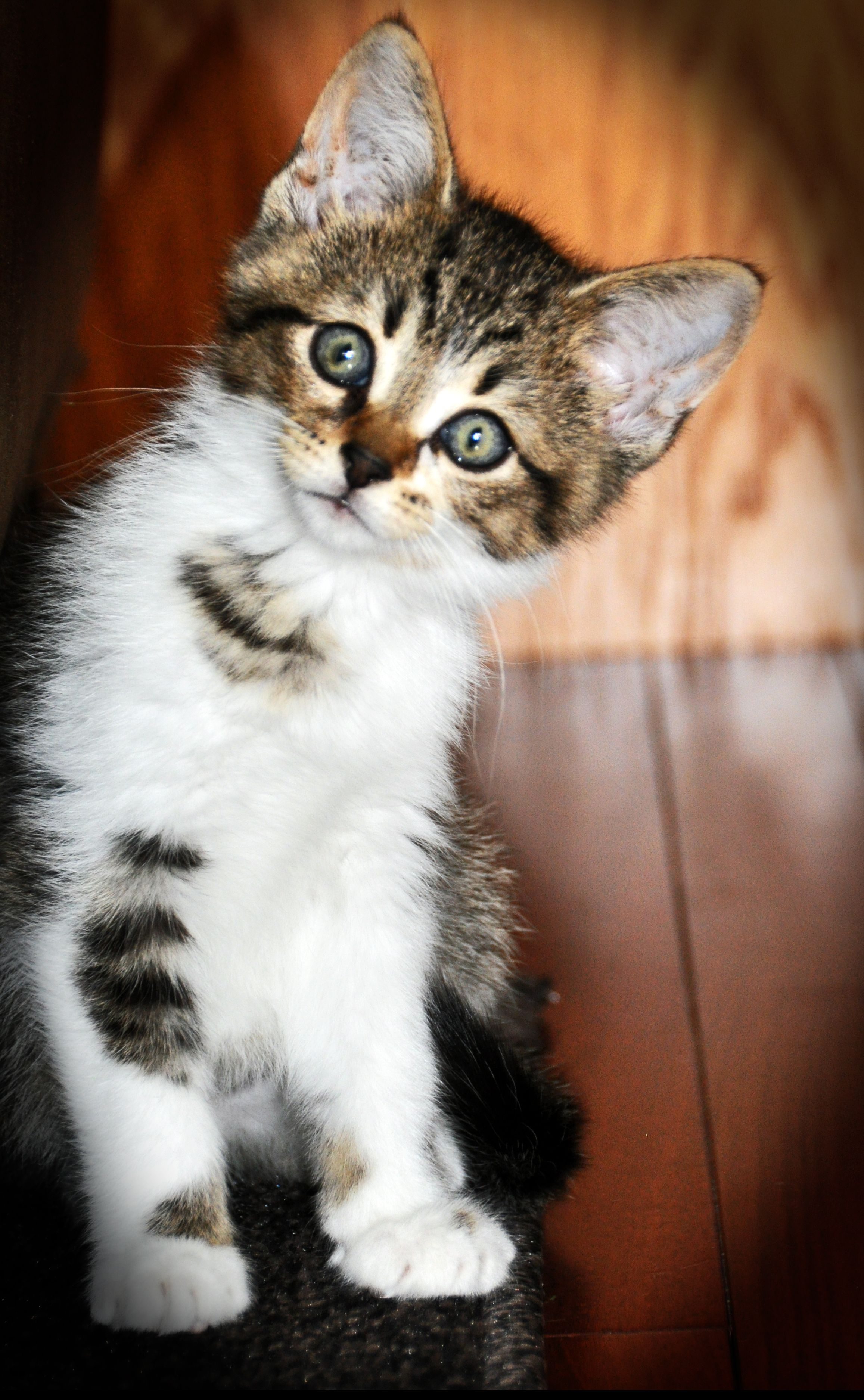 About Us Kittens, puppies, Cute animal pictures, Animals