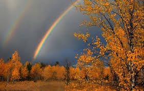 Картинки по запросу дождь осенью фото | Пейзажи ...