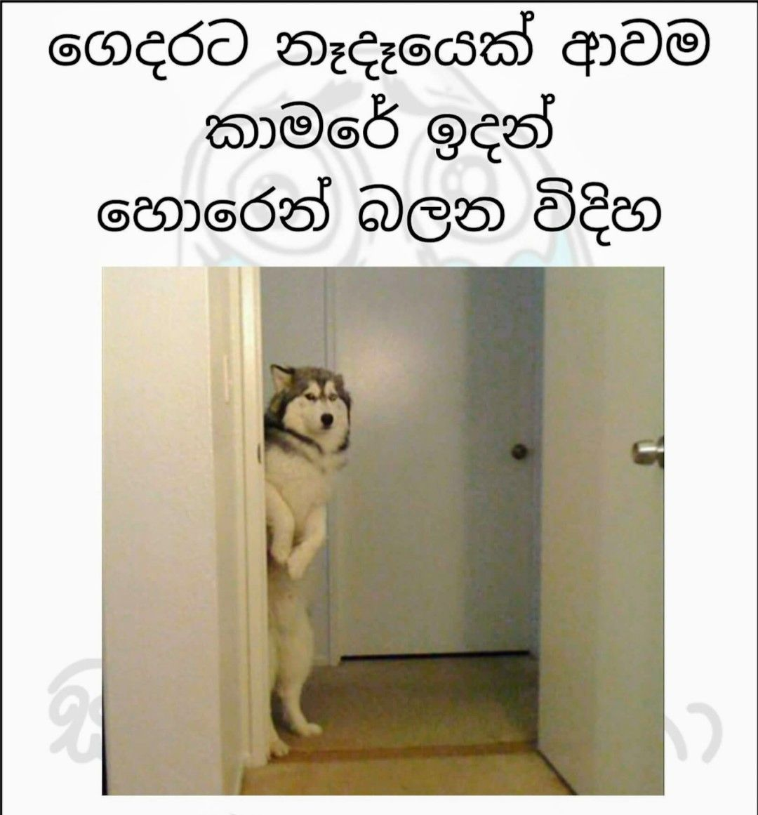 Pin By Malie On Lankan Memes Fun Quotes Funny Jokes Quotes Funny School Jokes