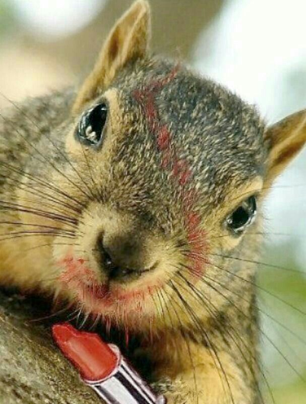 Pin By Ruth Mcneill On Animals Squirrels Squirrel Appreciation Day Cute Squirrel Squirrel