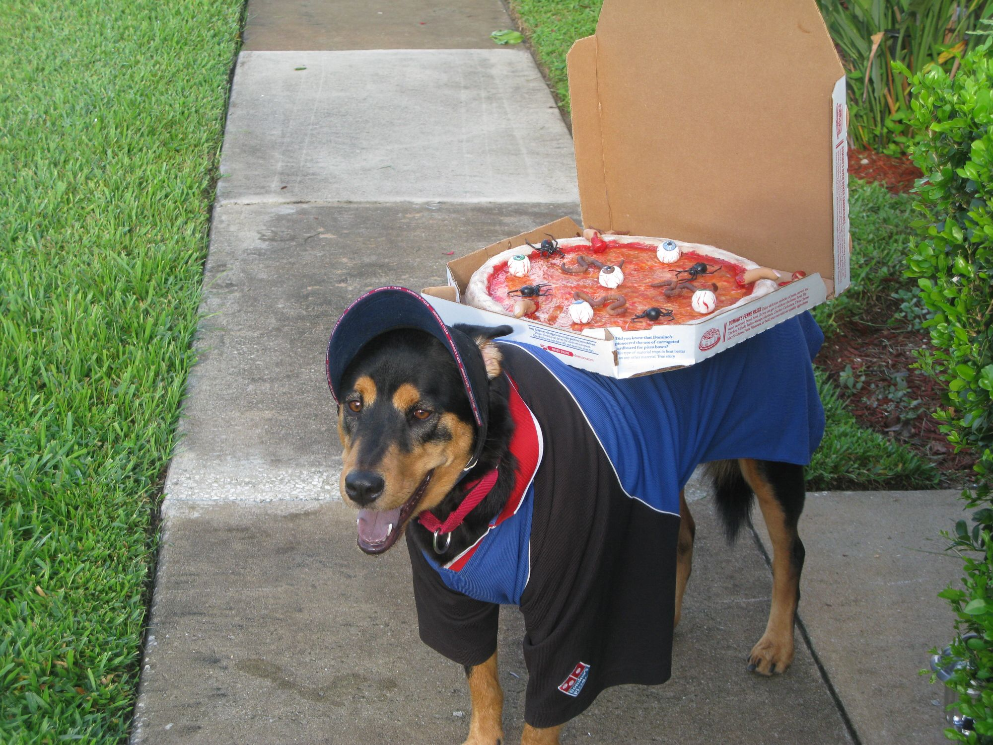 Dominos Delivery Dog Rockysace Halloweenpets Funny Animals