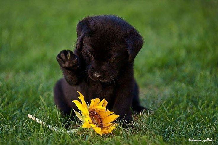 Most Inspiring Lab Black Adorable Dog - beba6670d666ac00eb66406fb7c20e9d  Snapshot_191762  .jpg