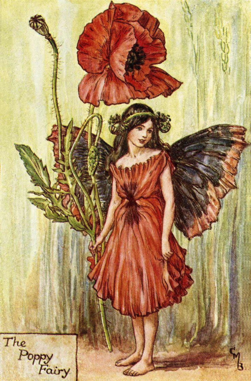 The Poppy Fairy Cicely Mary Barker Zz Cicely Mary Barker