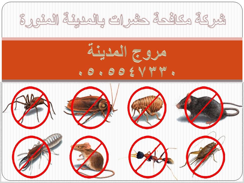 شركة مكافحة حشرات ورش دفان بالمدينة المنورة 0505547330 مروج المدينة bebb78486c2ecb5d5b23