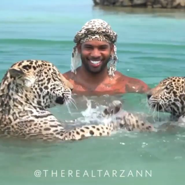 Anyone Want To Swim With Leopards - - #AnimalsandPets
