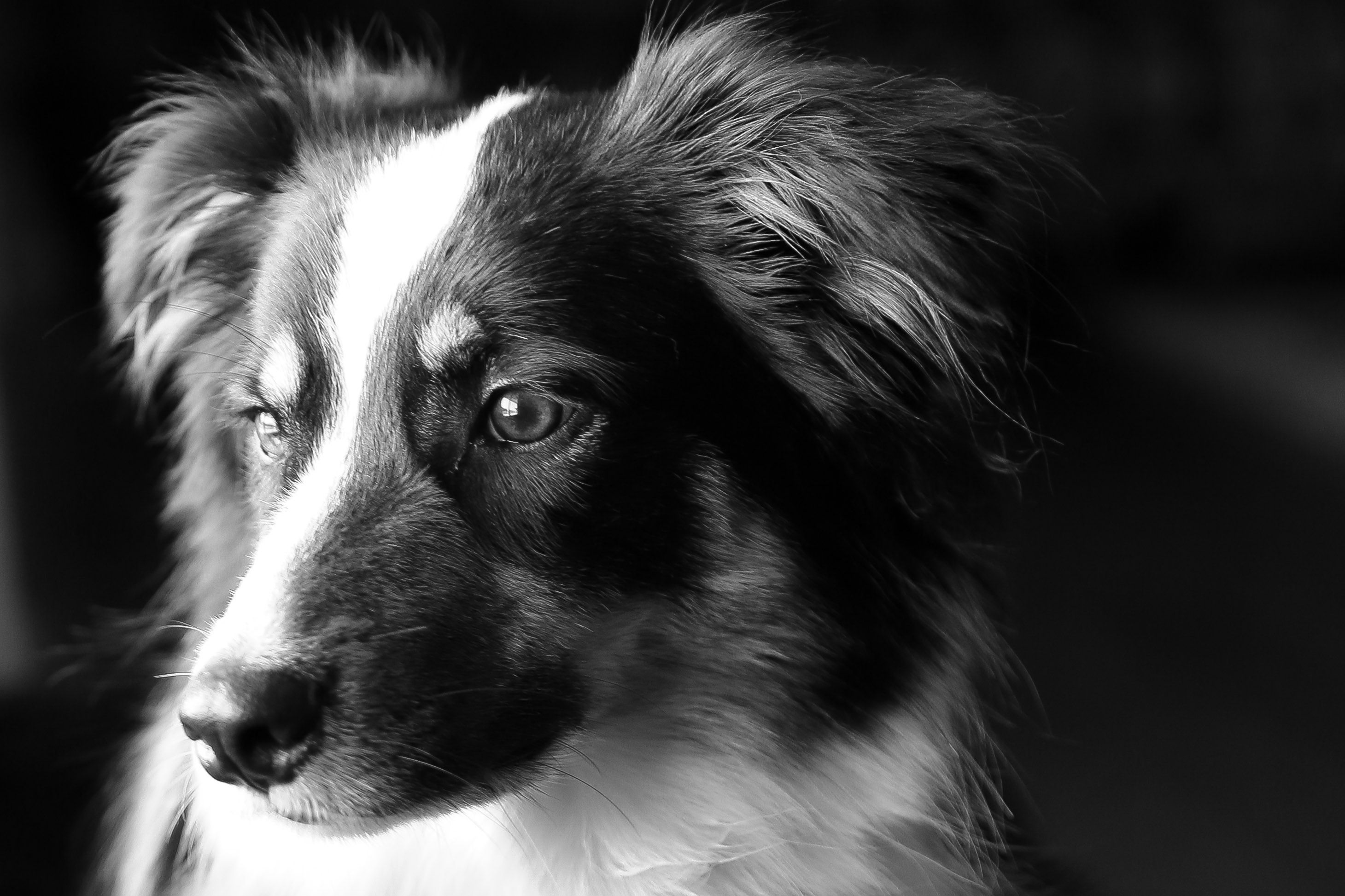 Image result for dog black and white