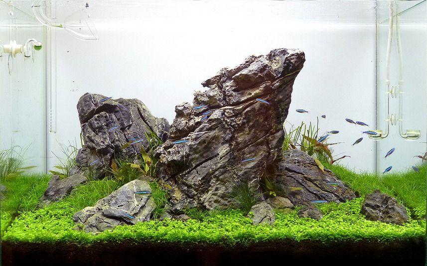 A fantastic 84l nature iwagumi aquarium by Attila Varga ...