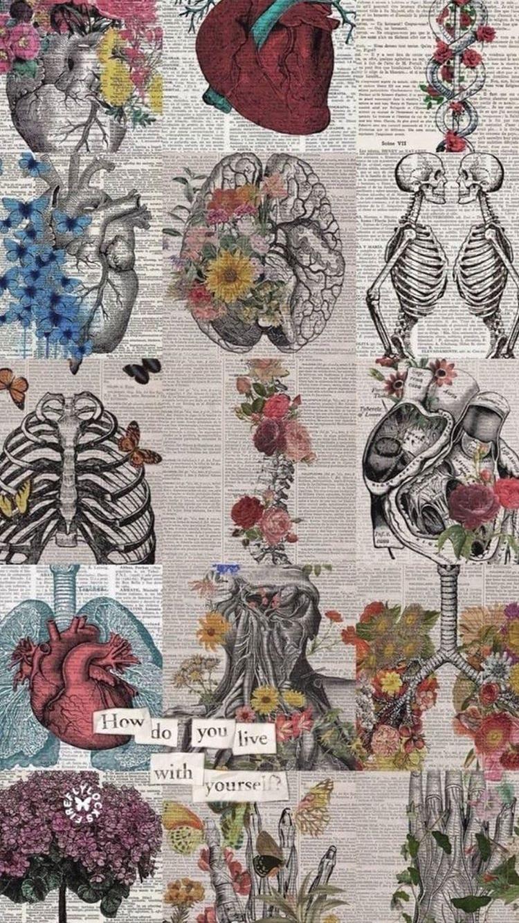 Pin By Estela Beatriz Santos On Squelette Art Wallpaper Anatomy Art Medical Wallpaper