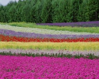 Identification Of Perennial Flowers Made Easy English Garden Ideas