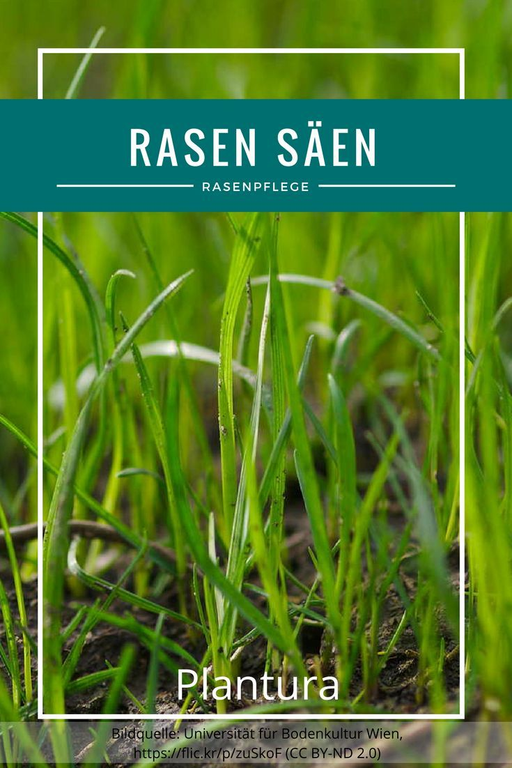 Rasen Säen Richtiger Zeitpunkt Anleitung In 6 Schritten Rasen