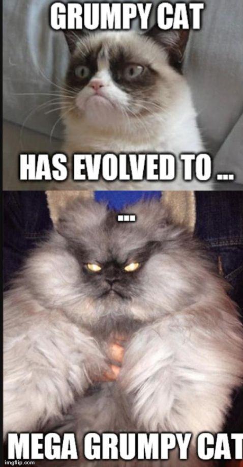 Grumpy Cat Meme Grumpy Cat Quotes Funny Grumpy Cat Memes Grumpy Cat