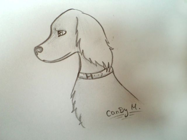 HD wallpapers how to draw dogs