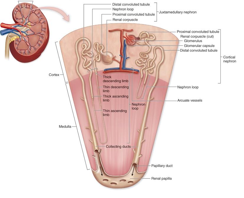 Pin de efrat wald en medicine | Pinterest | Aparatos y Medicina