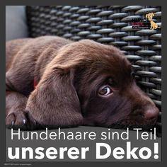 Hundehaare sind... #funnykittens