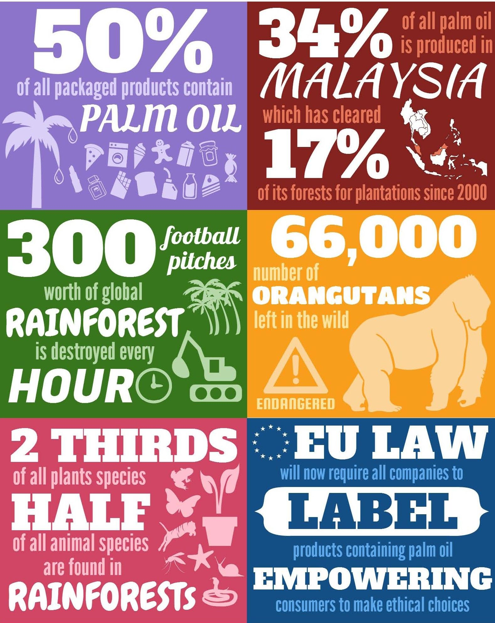 Rainforest Conservation Facts | Save the Rainforest | Pinterest ...