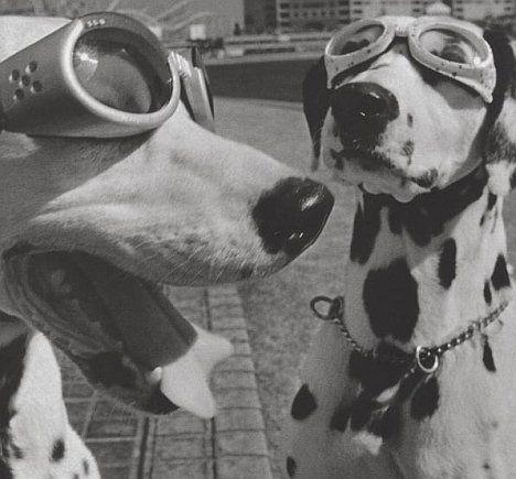 Elliott Erwitt  Dogs  Bilder  Hunde Schwarzwei