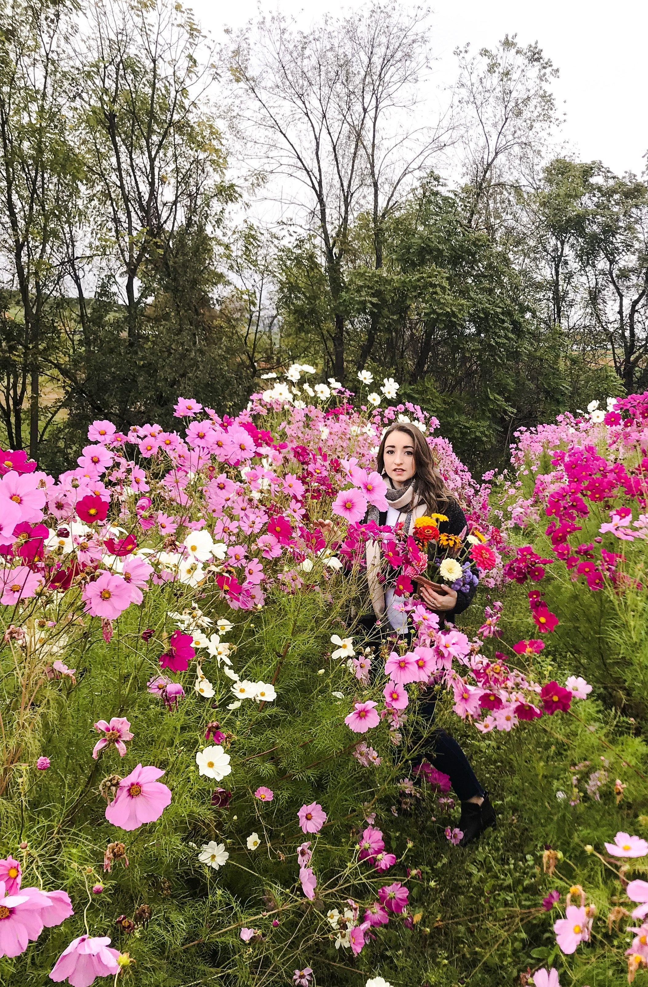 Fall In Appalachia Picking Flowers Picking Flowers Appalachia
