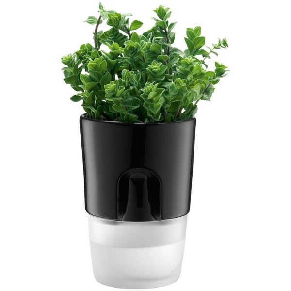 Bodum - Bistro Herbs Pot ($66) ❤ liked on Polyvore featuring home, outdoors, outdoor decor, plants, fillers, flowers, items, nature, cooking and herbage pots