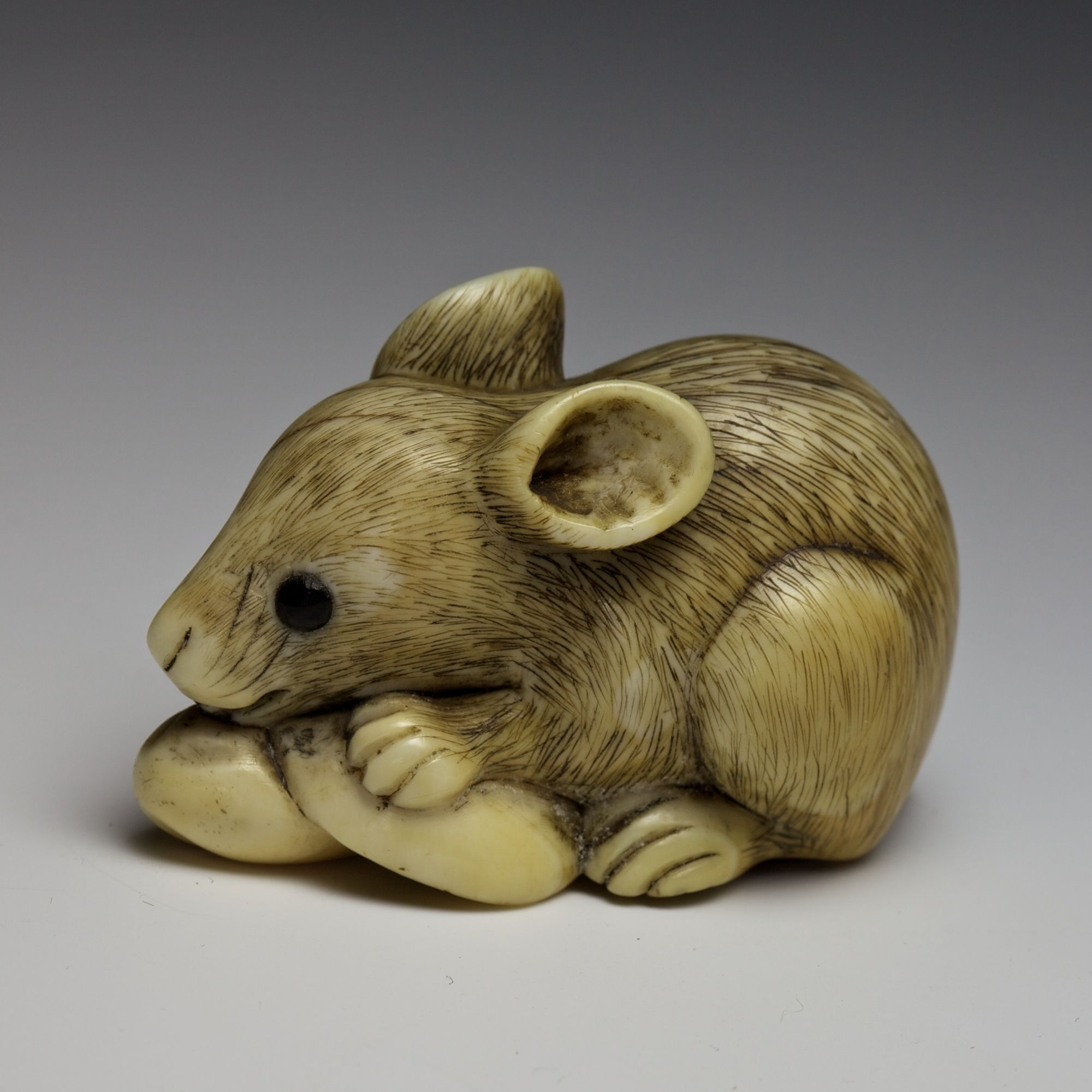Rat with mushroom Kyoto school, early 19th Century  Ivory netsuke; eyes inlaid in black horn Length: 4.5 cm  An early 19th Century large ivory netsuke of a crouched rat holding a mushroom in its paws with the tail next to the body. The netsuke is larger than usual and shows a nice compact structure with a well-patinated ivory.