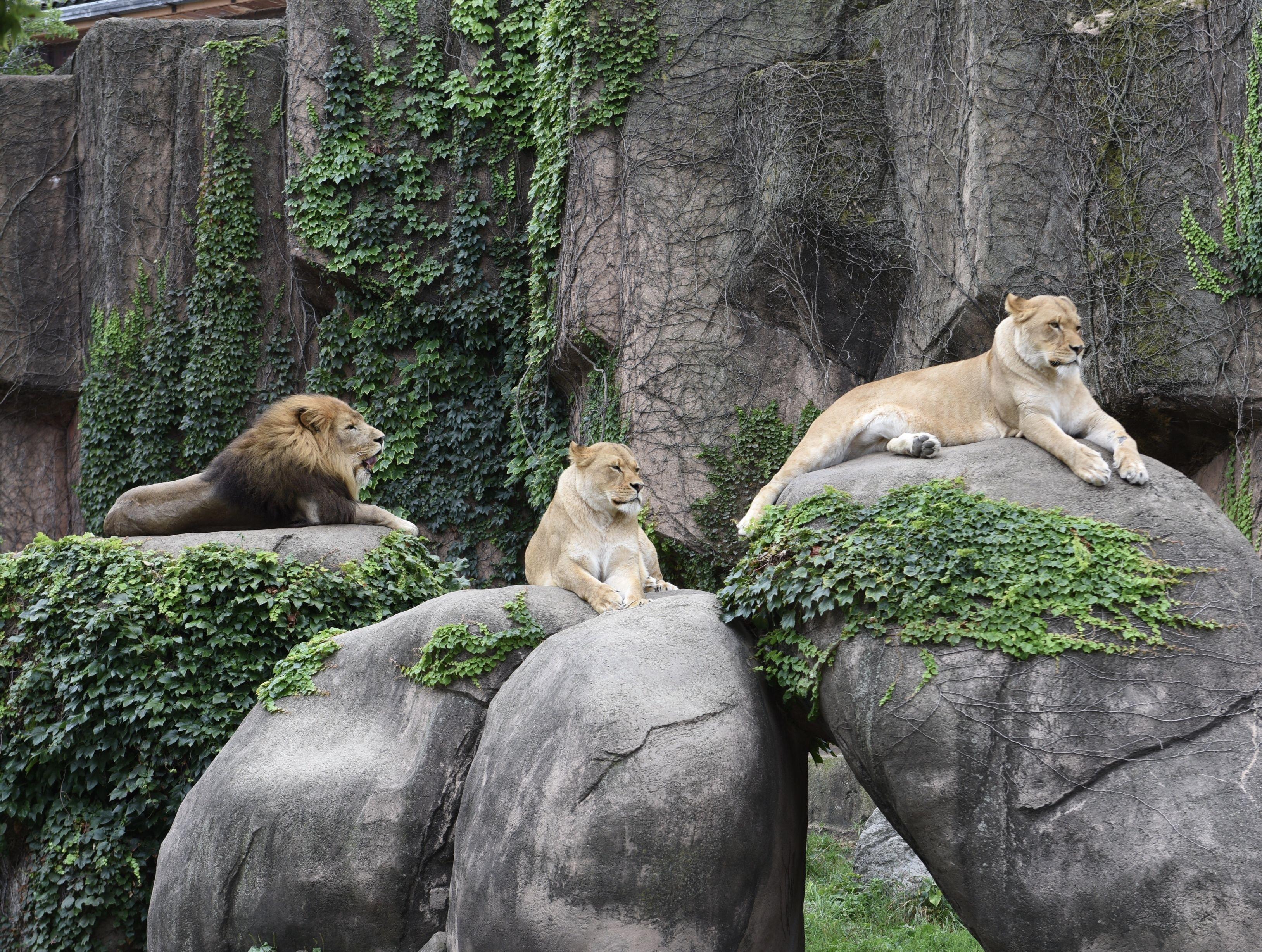 The 10 Best Zoos in the US Detroit zoo, St louis zoo