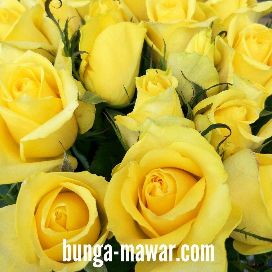 Dozen Of Yellow Roses Bunga Tanaman Mawar