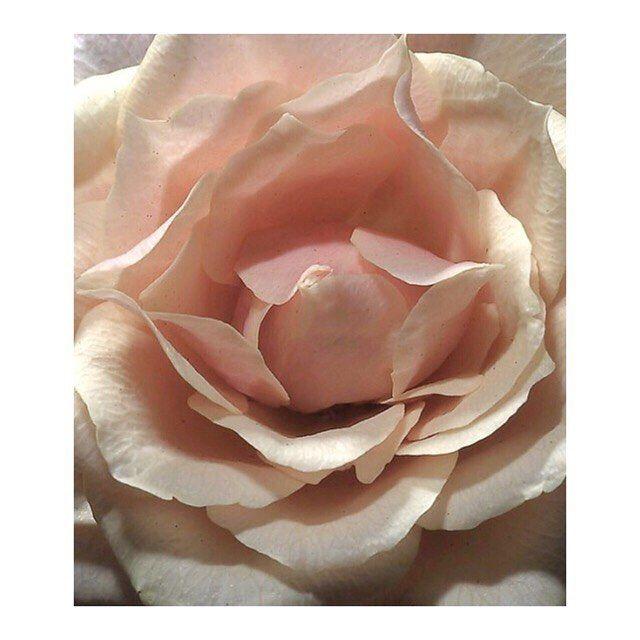 f o r  y o u  x . . . . . #bellamummablooms #flowers #flower #petal #petals #nature #beautiful #love #pretty #blossom #sopretty #flowersofinstagram #flowerstyles_gf #flowerslovers #flowerporn #bride #floral #florals #flowermagic #instablooms #bloom #blooms #botanical #floweroftheday #love #rose