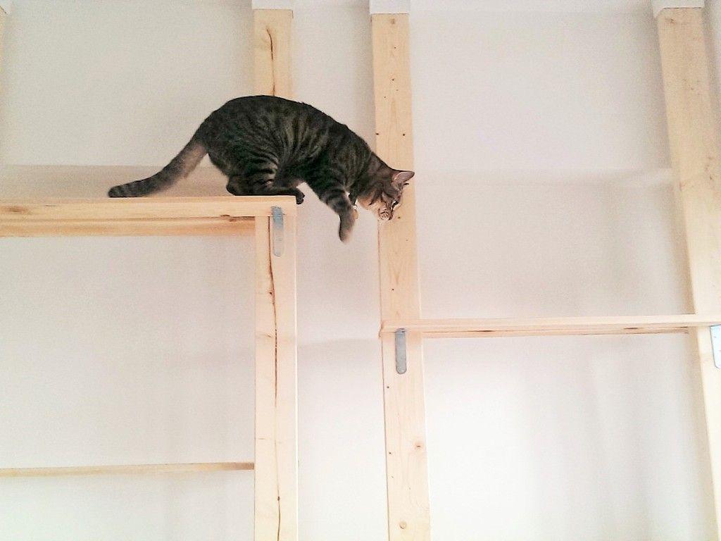 左上の段から右下の段へと飛び移ろうとする猫