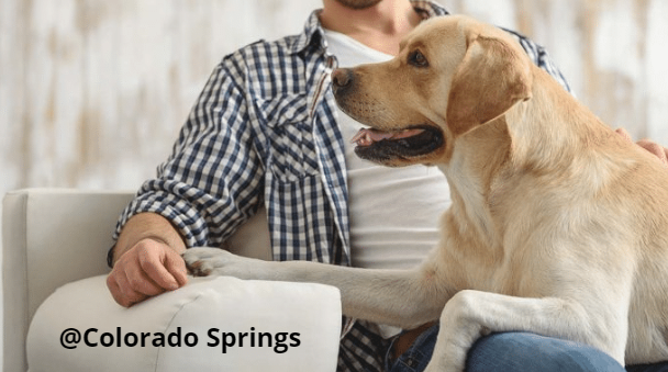 Pet Friendly Colorado Springs Cheap Hotels Special Offers Dogs
