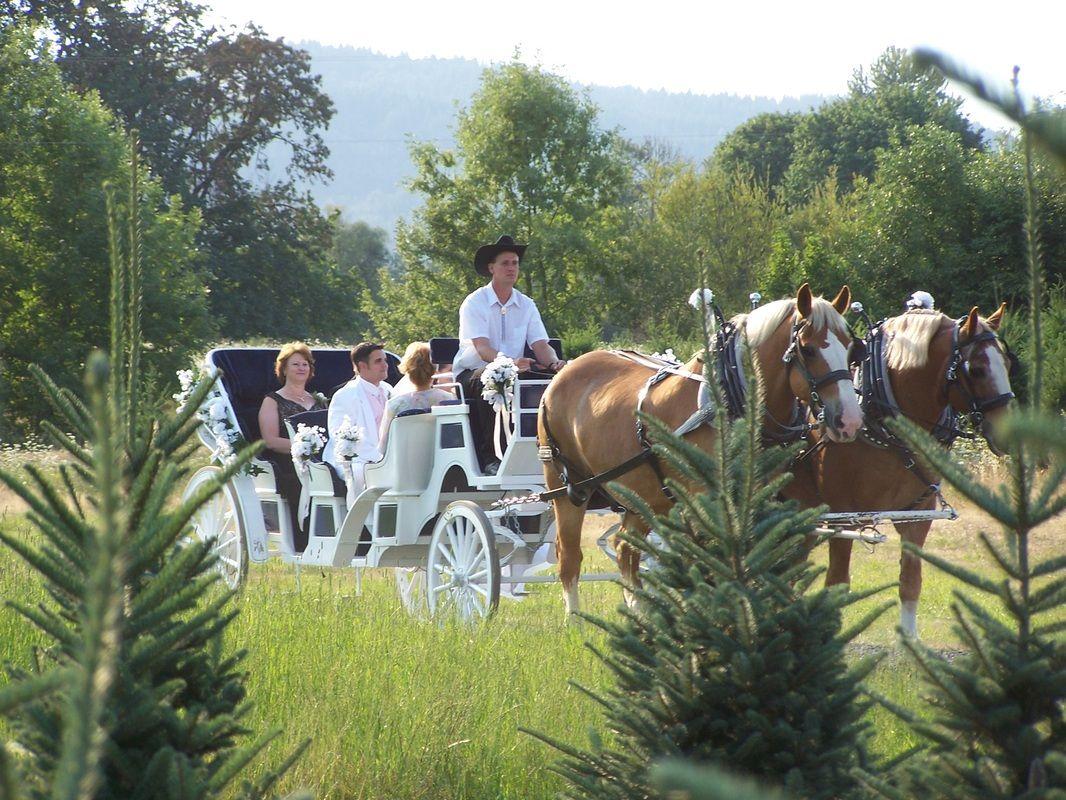 Northern Lights Christmas Tree Farm | Wedding ideas | Christmas tree ...