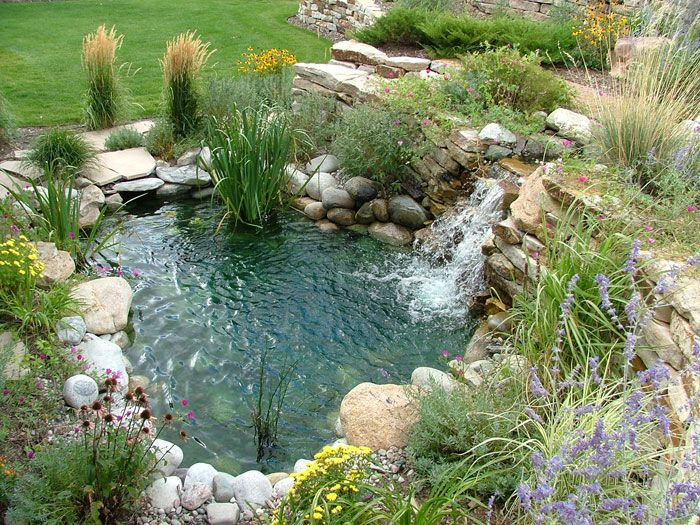 Timberline landscaping inc colorado springs co for Backyard pond maintenance
