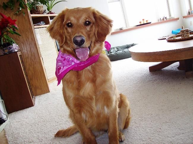 House And Pet Sitter Needed For 3 Weeks Sw Colorado House Sitter